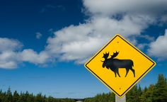 Head to Ontario's wilderness for a Moose sighting! I want to see a moose!