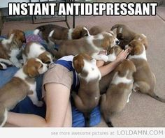 Funny | Instant Antidepressant