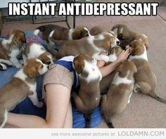 Funny | Instant Antidepressant