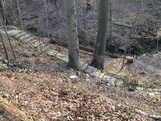 Steps to secret garden Garden, Plants, Garten, Lawn And Garden, Gardens, Plant, Gardening, Outdoor, Yard