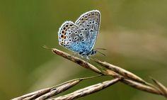 Plus de la moitié des papillons des prairies d'Europe ont disparu depuis vingt ans