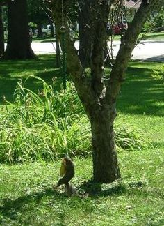 Keeps the squirrels out of the bird feeder and the reviews are hilarious.
