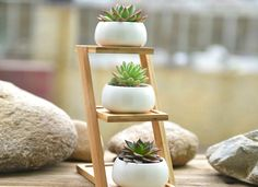 Starting your own garden doesn't have to be daunting. Start as small as you like with a windowsill garden. These space-saving planters are just right for a modest indoor garden—whether you're a green thumb or a chronic plant killer.