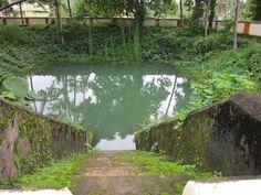 Thrikkakara temple pond, Kerala