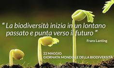 Diva Dea Weag / Giornata mondiale Biodiversita (835x500 foto) : Il 22 maggio è Giornata della Biodiversità.E' un tema che riguarda tutti,molto da vicino.Comprende la vida in tutte le sue forme:l'acqua che beviamo,il cibo di cui ci nutriamo,le piante che coltiviamo,gli esseri vivente che ci circondano.La giornata mondiale della Biodiversità richiama l'importanza tutelare la straordinaria ricchezza costituita da tutte le specie viventi sulla Terra.La giornata è stata proclamata nel 2.000 dall'