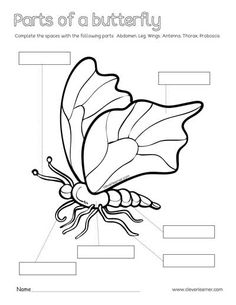 Subtraction Kindergarten, Free Kindergarten Worksheets, Kindergarten Writing, Thanksgiving Math Worksheets, Basic Sight Words, Butterfly Project, Butterfly Coloring Page, 1st Grade Writing, Culture Activities