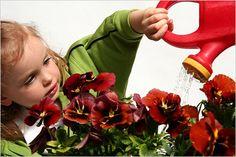 Цветы и растения в детской комнате оказывают благоприятное воздействие на ребенка. Многие...