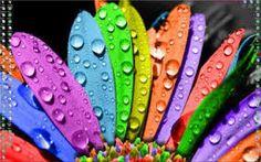 цвета радуги - Поиск в Google