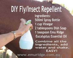 DIY Fly and Insect Deterrent This recipe can also be used on other animals besides horses such as cows, sheep, goats, dogs etc. Fly Repellant, Insect Repellent, Emu, Homemade Horse Fly Spray, Fly Spray For Horses, Get Rid Of Flies, Horse Care Tips, Young Living Essential Oils, Insects
