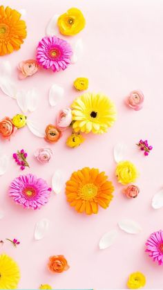 floral wallpaper, flowers, and wallpapers