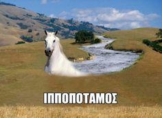 Ένα όμορφος λευκός ιπποπόταμος..!