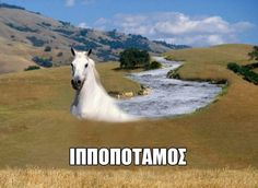 Greek Memes, Cringe, Haha, Hilarious, Jokes, Humor, Random Stuff, Funny Stuff, Animals