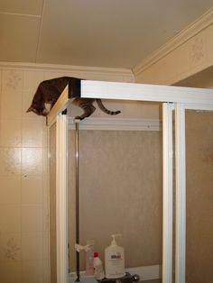 Allt går att undersöka om man är katt ;)
