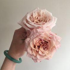 Shimmer Rose, peach rose, blush rose, peachy pink rose, DIY wedding flowers, garden roses, Flower Moxie