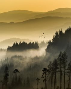 """Morning flight... - A bit of pushing in photoshop on this archive image from the Dukes Pass, Trossachs....Check out my website at  <a href=""""http://davidmould.co.uk"""" rel=""""nofollow""""> My Website</a> or my <a href=""""https://www.facebook.com/Davidmouldphotography"""" target=""""_blank"""">Facebook page</a>"""