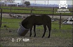 GIFBAY - I forgot how to horse - http://joronomo.com/funny-images/funny-gifs/gifbay-i-forgot-how-to-horse/