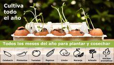 Tomates, pimientos, calabacines, pepinos, naranjas, limones y hasta hierbas aromáticas… ¡Con el calendario de siembra de Paula ya no tienes excusa para cultivar todo el año!