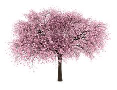 20 Free Tree PNG Images - Cherry Blossom