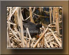 Wall Art Print Nature Photography Bird Photo by EtaGeminiArt