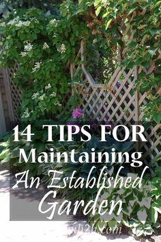 14 Tips For Maintaining An Established Garden   Have a garden that's been around for a while and not sure how to maintain it so that it stays looking good? Or maybe you just bought a new house that has a garden which needs some help? Click here to get some tips on how to clean up and maintain an existing garden.