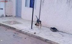 Cães ficam sem água e comida amarrados em poste em Parnaíba