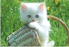 ... essential things that you should concern on how to take care of a cat - Know how to taje care of cats at Catsincare.com!