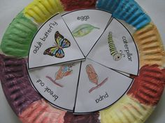 Butterfly life cycle activity.