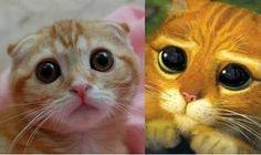Le vrai chat Potté