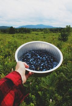 blueberry picking --- reminds me of Hatcher Pass Berry Picking! Blueberry Picking, Simple Pleasures, The Great Outdoors, Life Is Good, Harvest, Summertime, Nature, In This Moment, Healthy