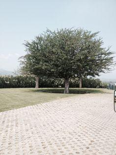 Jardines de Mexico, Morelos.