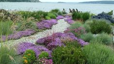 Ground covers level and focus the visual field. Here's a great example of how the ground plane, filled with one blooming plant, can draw the eye forward through a design. The gravel path leads us into the larger planting and out to the water, but the creeping thyme (Thymus serpyllum, zones 4 to 8) ground cover frames and guides, too, like runway lights. If there were a variety of flowering species down low, we'd get lost in the visual chaos, and the calm and serenity the garden is evoking…