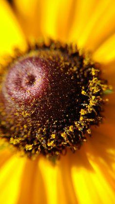 Macro Lens Photography, Virtual Flowers, Dandelion, Garden, Plants, Dandelions, Lawn And Garden, Gardens, Plant