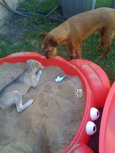 Keeley Pup (and Teagan too!): New Sandbox & Dog Entertainment