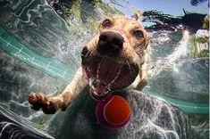 Fotografías de perros bajo el agua por Seth Casteel