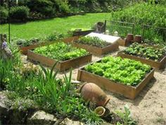 jardin potager, carrés potager