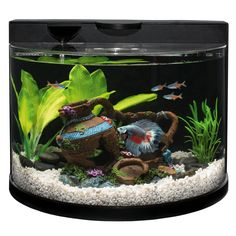 Top Fin® Bettaflo Betta Aquarium at PetSmart. Shop all fish starter kits online Betta Aquarium, Betta Fish Tank, Diy Aquarium, Beta Fish, Aquarium Design, Aquarium Driftwood, Aquarium Ideas, Biorb Fish Tank, Fish Aquariums