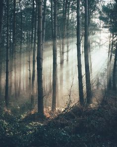 The #light through the woods. ~ETS