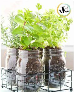 You'll have a continuous supply of seasonal fresh herbs on hand when you have a Mason Jar Herb Garden.