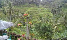 Ubud, Bali バリ島ウブドの景色 Country Farm, Bali, Plants, House, Home, Plant, Homes, Planets, Houses