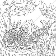 Snail and Flowers Coloring Page. Adult by ColoringPageExpress