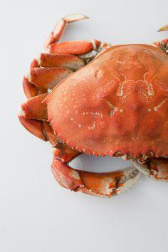 KIMBERLEY HASSELBRINK - crap - crab -
