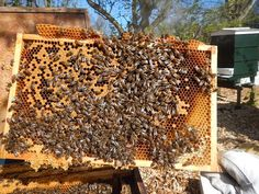 Your beekeeping year is about to change - Honey Bee Suite Raising Bees, Bee Farm, Bees Knees, Queen Bees, Bee Keeping, The Expanse, Farm Animals, Agriculture, Farmer