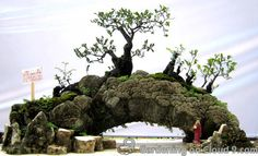 Image from http://www.happybonsai.com/wp-content/uploads/2010/01/penjing-bonsai-exhibition-07.jpg.