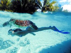 Swimming with Sea Turtles, Bora Bora #fuckdolphins
