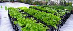 Thiết kế vườn rau gia đình