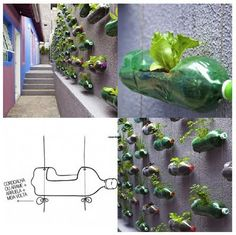 This vertical garden is made ​​from hanging plastic bottles. The facility is suitable for small plants such as herbs