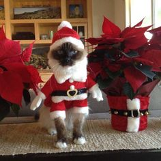 """LOL... Maybe there should be a Pets SantaCon!  via Huffington Post """"50 Pets In Christmas Costumes That Will Get You In The Holiday Spirit"""""""