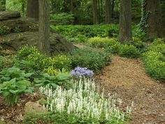 Woodland trail in the spring