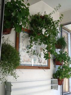 O nosso jardim de ervas aromáticas...a hortelã cresceu imenso