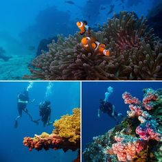Fantastic diving conditions right now. Great visibility lots of marine life and stunning corals = some very happy divers   #scubalife #marinelife #coralreefs #fish #kohlanta #scuba #coral #instadive #theandaman #thailand #paditv #krabi